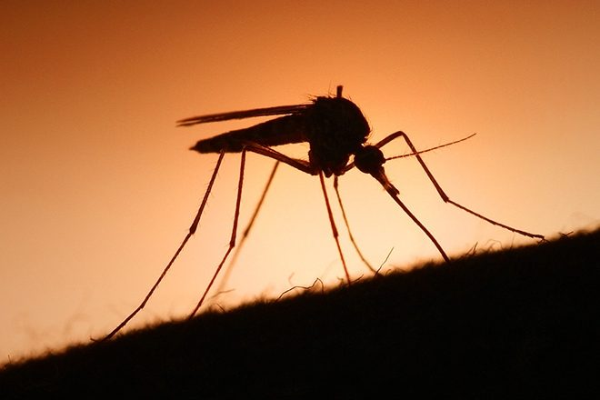 Study finds that Skrillex's music can protect you from mosquitos