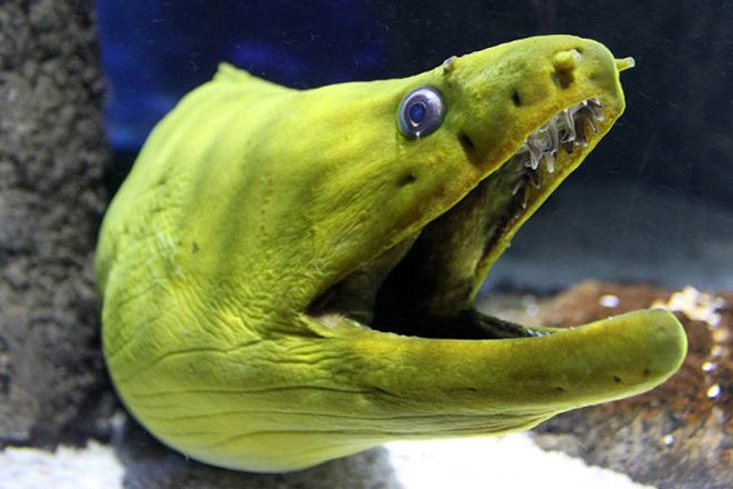 Britain's eels are getting high on cocaine
