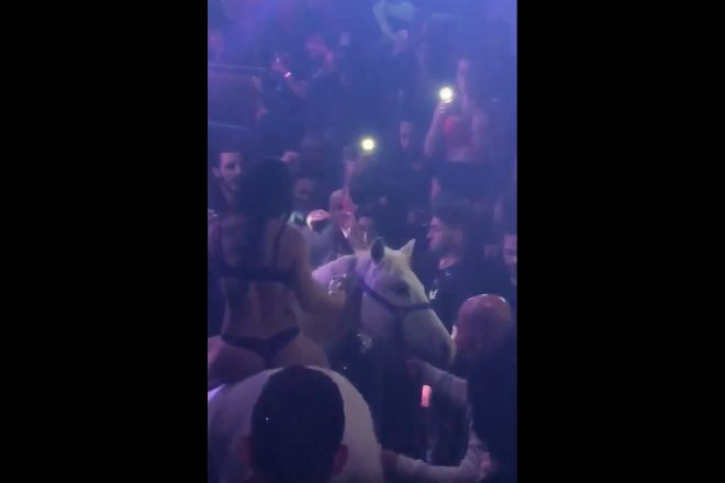 Police are investigating a Miami nightclub that brought a horse into the venue