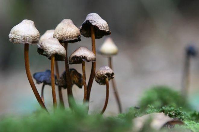Magic mushrooms could help treat depression