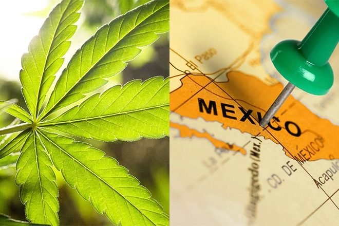 A bill just got passed to legalise recreational cannabis use in Mexico