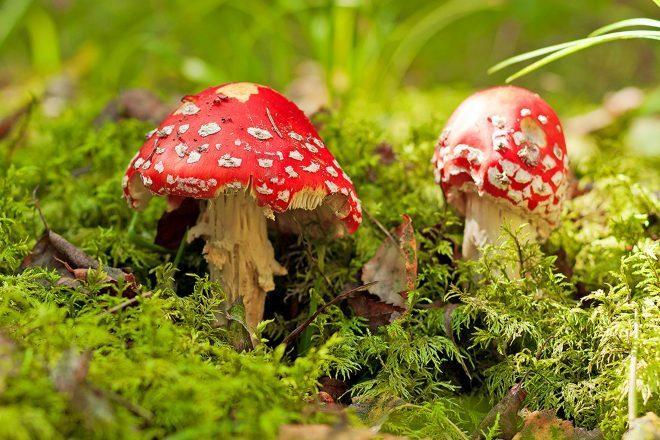 Campaign to legalise magic mushrooms gains momentum in California