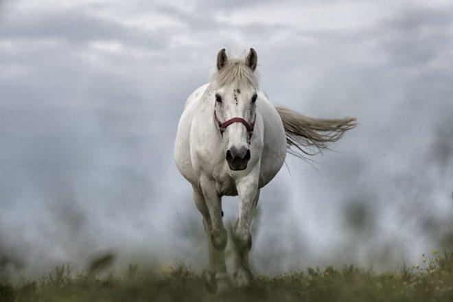 Lizenzentzug beim Nachtclub der ein Pferd einsetze